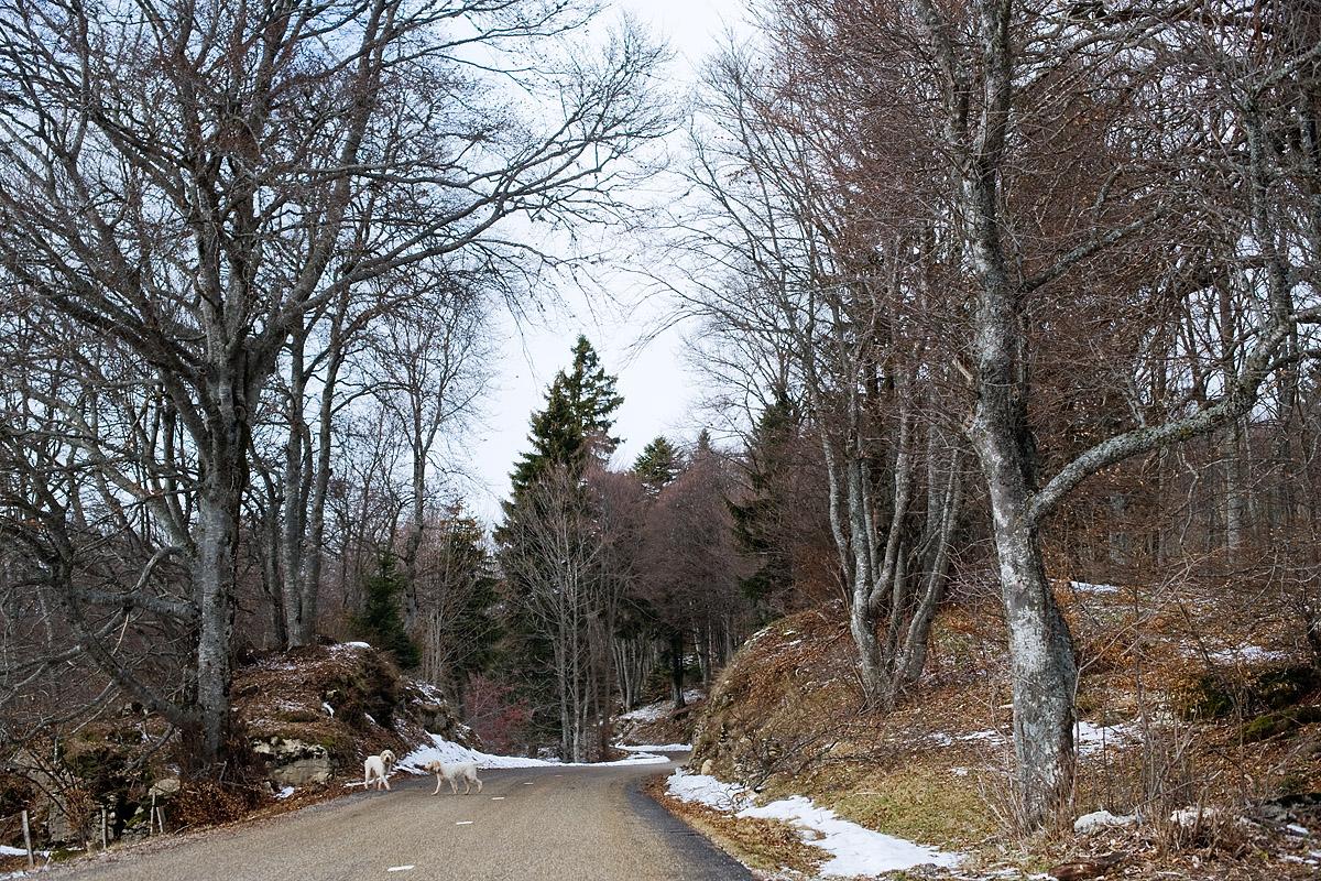 The road, Mont Salève